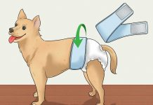 Dog Diaper Alternatives